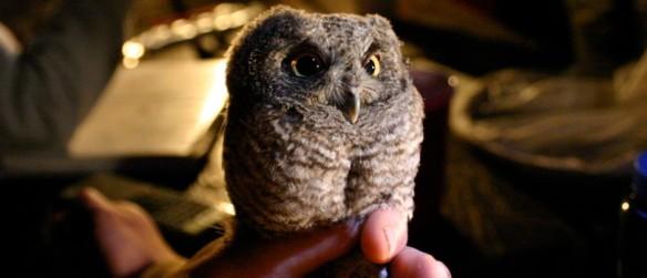 2_owl_banding-940x405